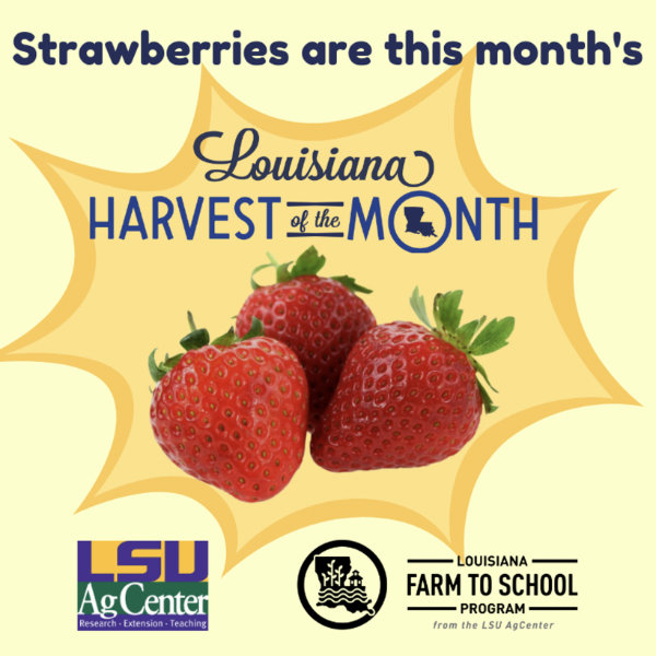 Strawberries are the Louisiana Harvest of the Month